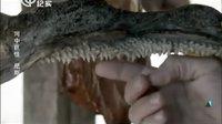 《河中巨怪》第五季第6集中文版:尼斯湖传奇(Legend of Loch Ness)