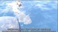 獵奇新闻周刊 20140514 牛人徒手放鲨鱼