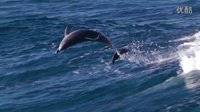 海豚舞浪 天籁震撼