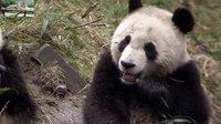 大熊猫2007