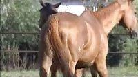 宝宝初看世界  看马  听儿歌《马儿来了》