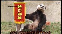 【萌笑来了】铁口神算熊猫再现江湖