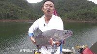 《游钓中国》第1集 高山水库幽会巨青