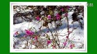 漠河风光相册20150516春晓摄影制作