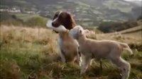 【信不信由你】动物善爱更动人!