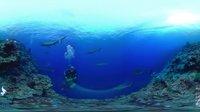 全景视频 鲨鱼 海底总动员 海底大世界