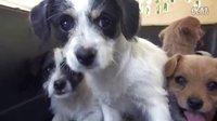 救了五只成为孤儿的小狗…(中文字幕)