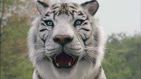 白虎吓跑军队