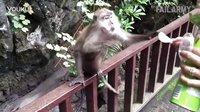 滑稽的猴子偷袭整蛊人类搞笑集锦