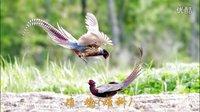 鸟的世界(家乡的鸟类)