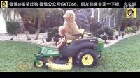 【土狗也会开机车搞笑短片03】幽默搞笑视频 傻缺恶搞吐槽视频