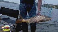 钓鱼实战(四)水库玉米重窝杨梅做饵博大鲤和草鱼