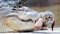 鳄鱼攻击人,可怕实拍!9个案例!