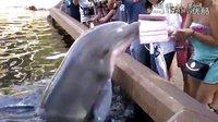 海豚要看平板 爆笑尴尬糗事集锦114 2016年8月