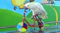 宝宝初看世界 看鹦鹉用吊桶打水 骑自行车