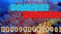 澳新两国奇异风情游第四集【罕见的珊瑚礁】