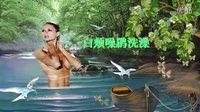 鸟类视频《白颊噪鹛洗澡》野生鸟视频