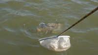 钓鱼视频《钩尖江湖》第六十二期 初探星星哨搏大草