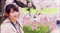 惊奇日本:不为人知的樱花绝景