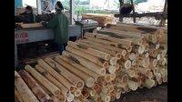智能木材加工机械, 直接把木头变成木皮, 可惜了这些树木