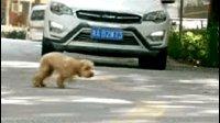 车前瞬间救下小狗狗