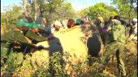 """马未都: 在南非给犀牛""""上眼药"""""""