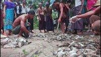 缅甸老鼠泛滥成灾, 当地官员称打死一只奖励50块钱!