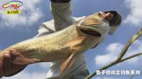 钓鱼实战50浮底结合, 全水层钓鱼攻略