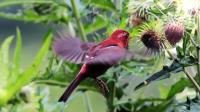 神奇大自然鸟类奇观第3集《金佛山精品鸟类大合集》多种鸟叫声