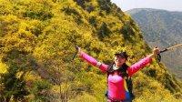 《徒步山东》济南区:连翘花海梯子山 漫山尽披黄金甲