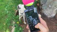 7种犬小工具考验