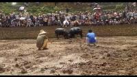 贵州凯里斗牛