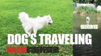 北京网红狗的黄金假期, 简直太幸福了, 我都比不上! 片尾惊现萨摩水怪!