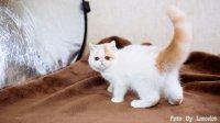 加菲猫 弟弟 焦糖 VLOG