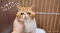 西安 加菲猫 阿财 弟弟 四个月 生活 VLOG