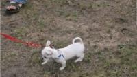 狗狗: 一次次出洋相, 全因个子矮, 怪只怪爹娘给的基因不够高大