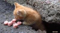 可怜的流浪猫怕人, 看见人来了就躲石头缝里, 真可怜