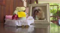 当你的宠物离世了怎么办 在泰国有这种服务