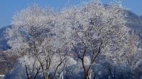 抒情朗诵《冬天来了》