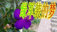 军营歌曲《绿军装的梦》MV流行歌曲网络歌曲