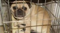 寒风中, 十几条狗狗等待出售, 祝福它们都能遇到好主人, 过上幸福的生活!