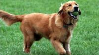养一条活泼可爱的狗狗, 让你的生活丰富多彩!
