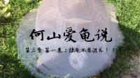 【何山爱龟说】第三季 第一集:陆龟不要混养!!!