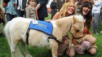 马中法拉利 身高只30厘米 和狗一般大小 它就是身份与财富的象征