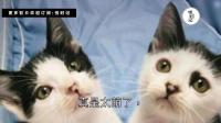 两只猫咪从小一起长大, 说好一起变美猫, 其中一只哈哈哈却越长越丑