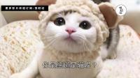 被萌哭! 主人每天帮猫咪Cosplay各种爆笑物品 「关东煮造型」太闹了吧