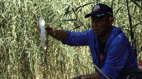 《游钓中国》第三季第45集  鸣翠湖探秘芦苇荡