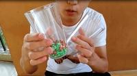 怎样把红绿混合的珠宝瞬间分开, 经典魔术1秒钟就能学会!