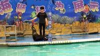 合肥野生动物园《海狮表演》雁飞晨光
