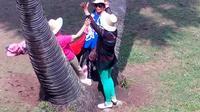 贵州屯堡山歌-喜鹊含梅站树桩